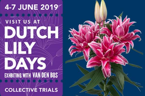 Dutch Lily Days 2019 (June 4th-7th)
