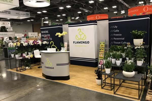 Flamingo Holland to showcase at Cultivate 2019